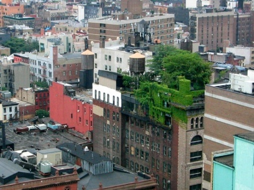 new-york-green-roof