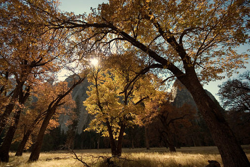 In the past decades the density of trees in Yosemite has declined; climate change is partly to blame. Photo Copyright 2008 Zach Schrock