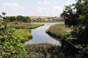 Coastal ecosystems, like sections of Freshkills Park (above), can provide a critical barrier to adjacent communities
